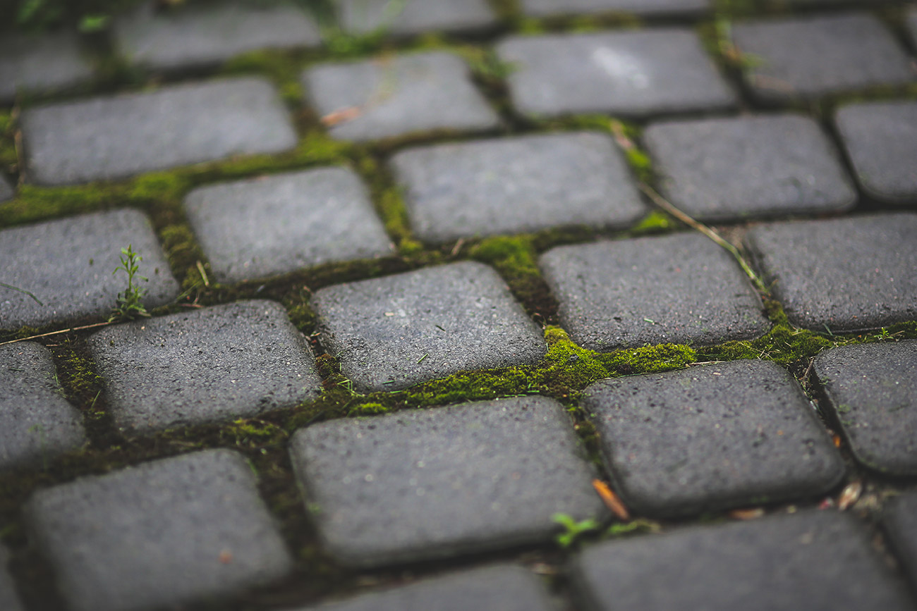Paving-stones-with-moss